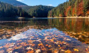 Ontario Eyalet Parkları & Doğa Turları