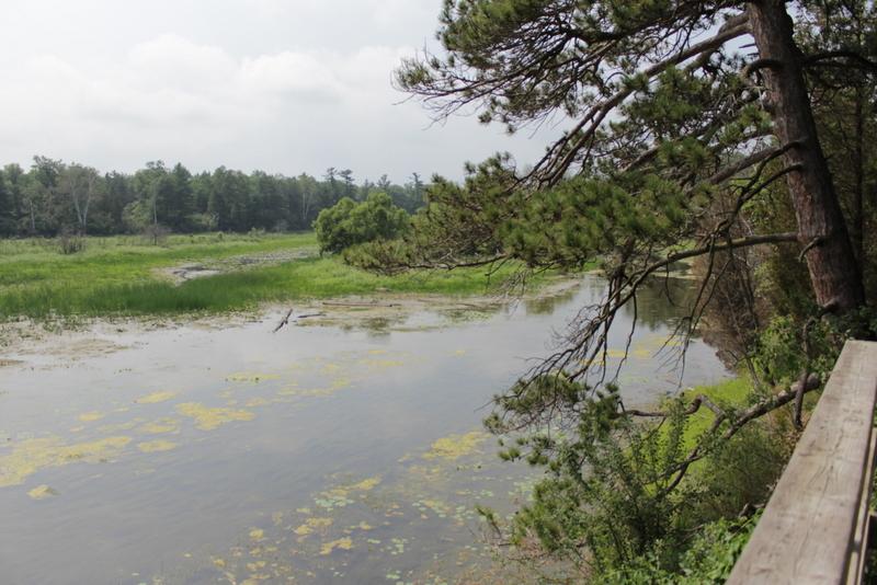 Pinery Eyalet Parkı