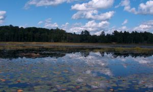 Ontario Eyalet Parkları: Killarney