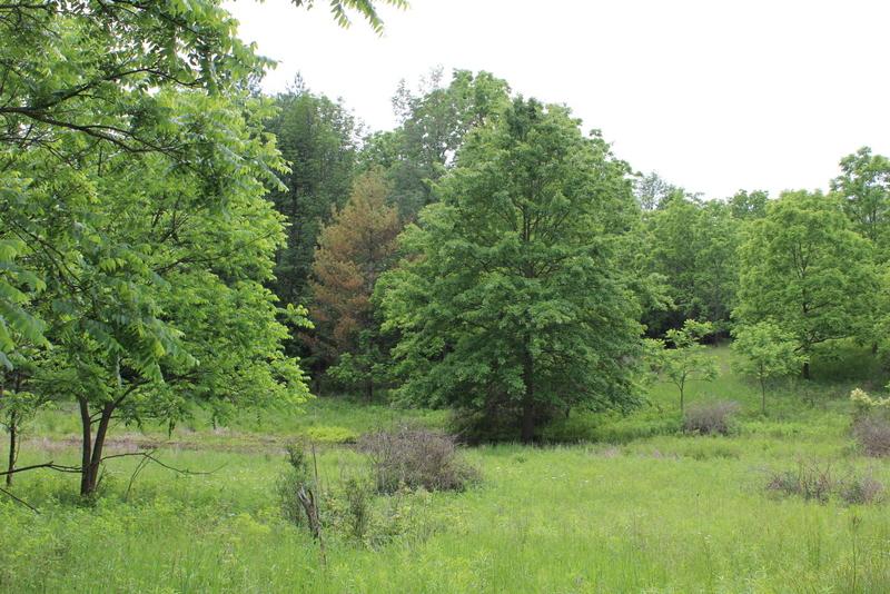 Short Hills Eyalet Parkı