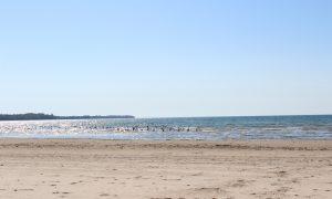 Sandbanks – Ontario Eyalet Parkları