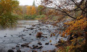 Oxtongue River-Ragged Falls – Ontario Eyalet Parkları