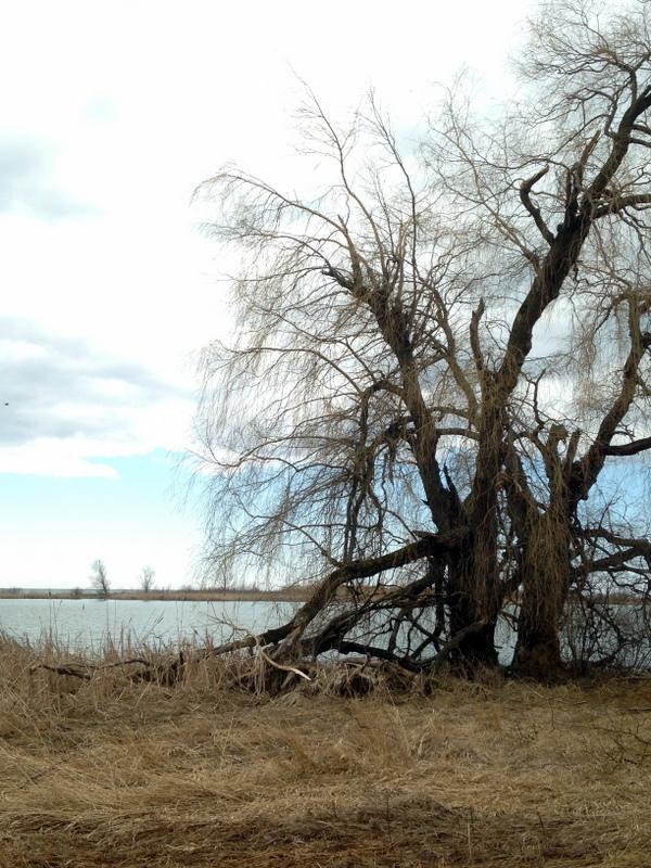 Darlington Park - Ontario Eyalet Parkları
