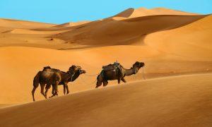 Fas – Kuzey Afrika'nın Egzotik Güzeli