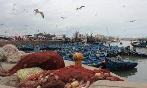 Kölelerin Müziği Gnawa Eşliğinde Essaouira
