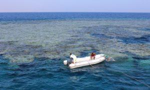 Kızıldeniz St John resiflerinde dalış safarisi