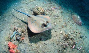 Cayman Dalış (Scuba) Rehberi