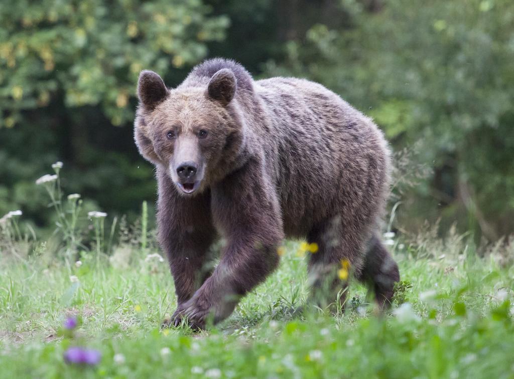 Ontario eyalet parklarında ayılar