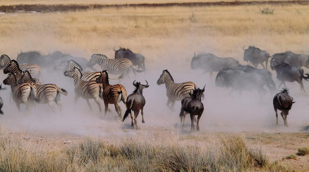 Afrika'da büyük göç