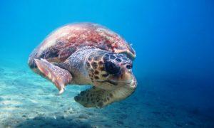 Dalyan Dive Centre – Dalyan dalış rehberi