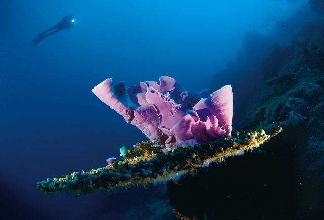 Malapascua dalış