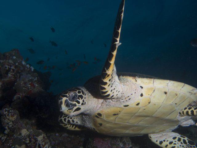 Maldivler Merkez Atolleri