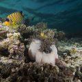 Maldivler liveaboard (dalış safari teknelerinde konaklama)