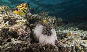Maldivler liveaboard (safari tekneleri ile dalış turları)