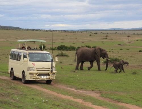 Masai Mara (Maasai Mara)- Safari Cenneti