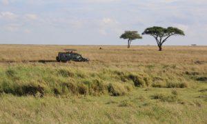 Tanzanya'da Sonsuzluk Parkı – Serengeti