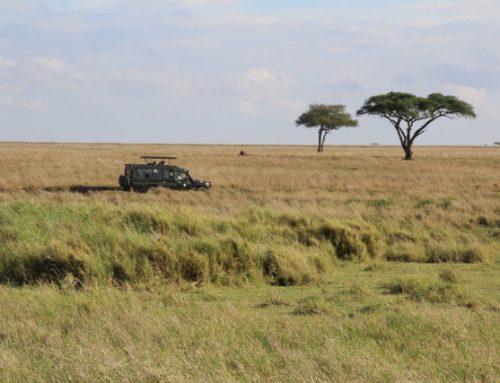 Serengeti – Tanzanya'da Sonsuzluk Parkı