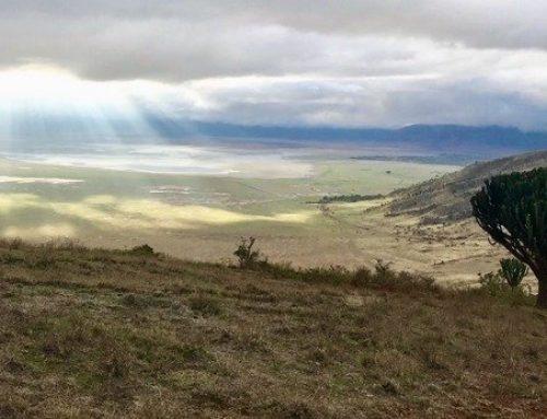 Ngorongoro – Dünyanın En Büyük Krateri