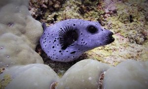 Tanzanya Zanzibar scuba diving (tüplü dalış)