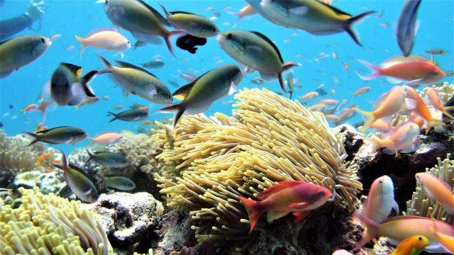 Zanzibar-scuba-diving