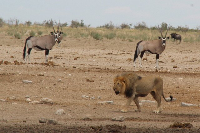 Etosha Ulusal Parkı