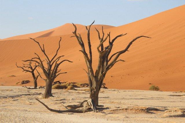 Namib Çölü - Deadvlei | Küçük Dünya - Gezi Rehberi