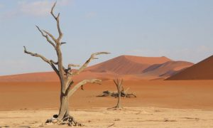 Kızıl Namib Çölü: Namib Naukluft Ulusal Parkı