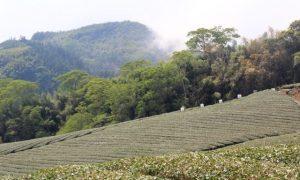 Dağların Ardındaki Mistik Güzellik: Chiaiyi
