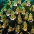 Dünyanın En Güzel Dalış ve Şnorkel Bölgelerinden Biri – Raja Ampat (scuba diving)