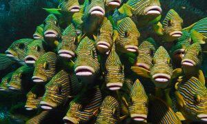 Dünyanın En Güzel Dalış ve Şnorkel Bölgelerinden Biri; Raja Ampat (scuba diving)