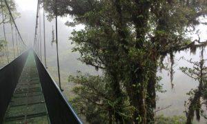 Bulut Ormanlarıyla Süslü; Monteverde