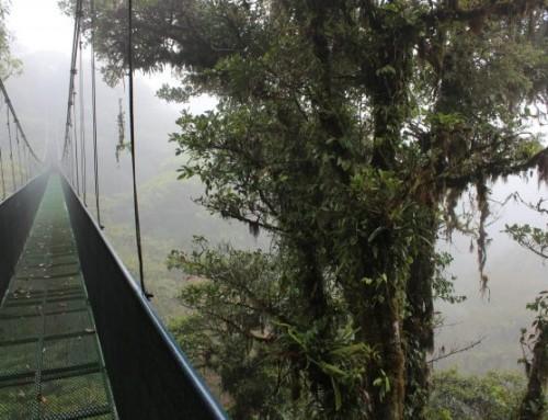 Monteverde – Bulut Ormanlarının Süsü