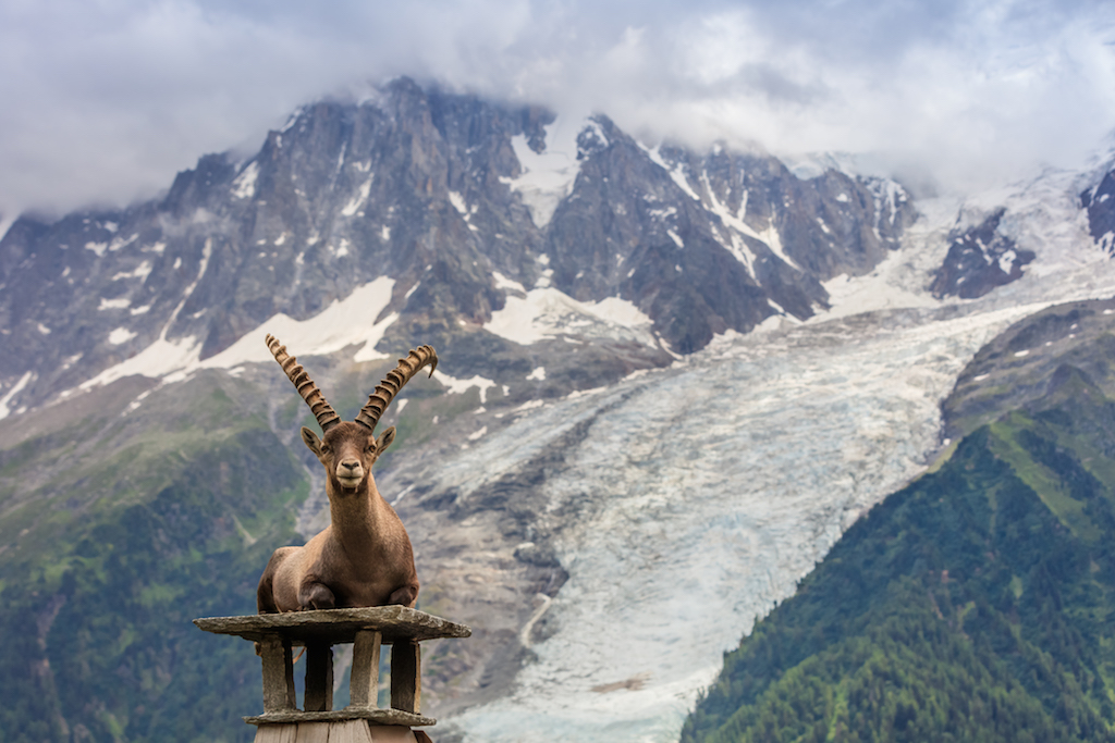 Ibex, Mont Blanc | Küçük Dünya - Gezi Rehberi