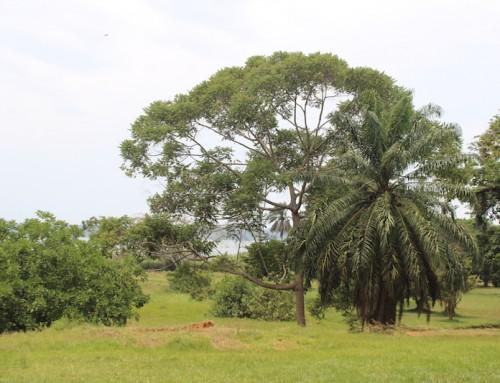 Entebbe – Uganda'da yemyeşil bir kent