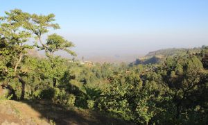 Dağ gorillerinin ülkesi Uganda