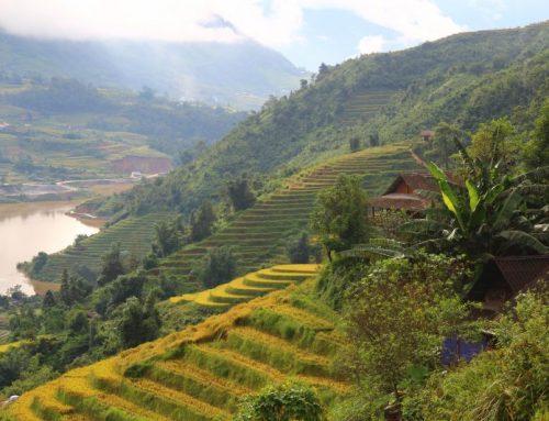 Sapa (Sa Pa) – Vietnam'ın Pirinç Tarlaları