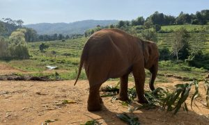 Filler – Elephant Jungle Sanctuary Camp