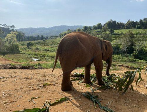 Filler – Elephant Jungle Sanctuary Camp