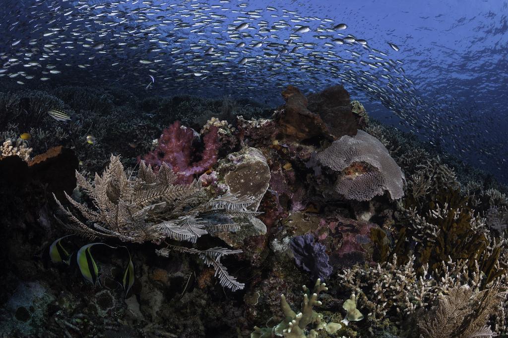 Dünyanın en güzel dalış bölgeleri